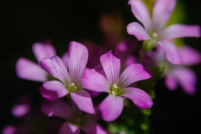 Beautiful flower photography portrait of purple blooms