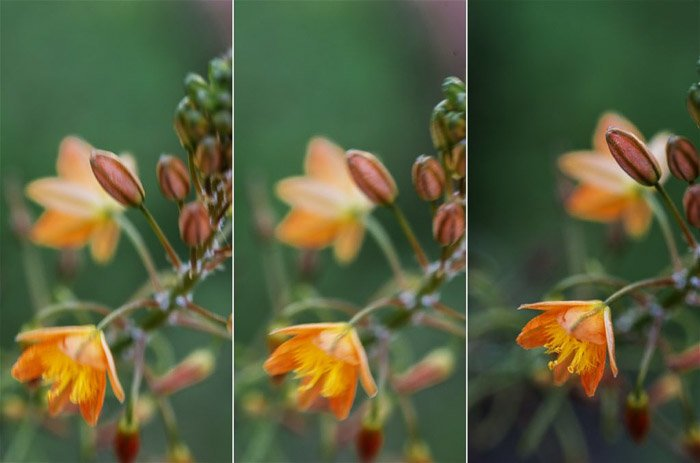 A triptych of flower photography