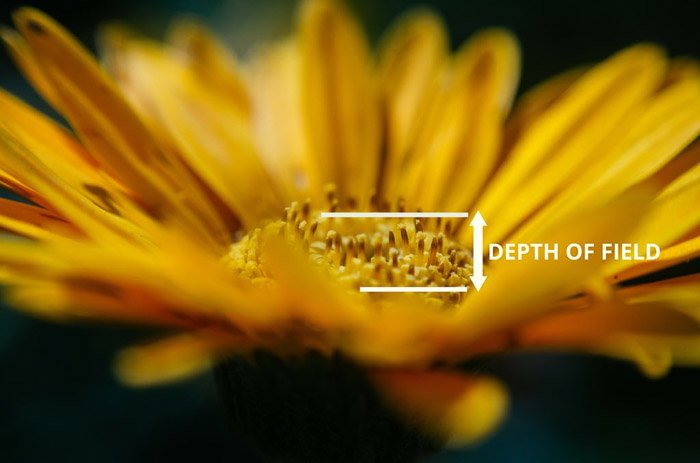 A photo of a yellow flower with depth of field marked