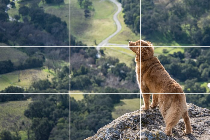 Photo of a dog standing on a cliff with photo grids