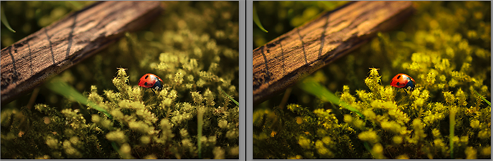Diptych showing what is vibrance and how it effects macro photography
