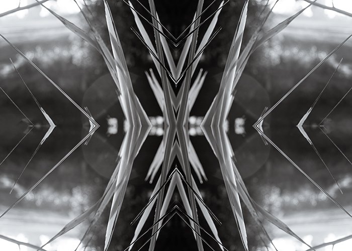 Manipulated black and white photo of Harakeke flax on the banks of the Ōpāwaho River, Christchurch, New Zealand.