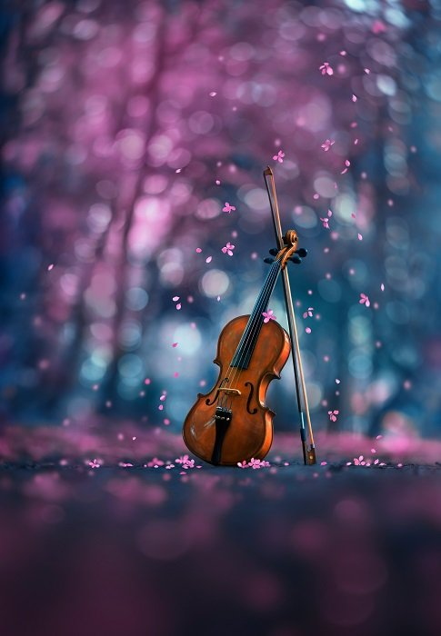 A violin in a forest surrounded by purple cherry blossoms
