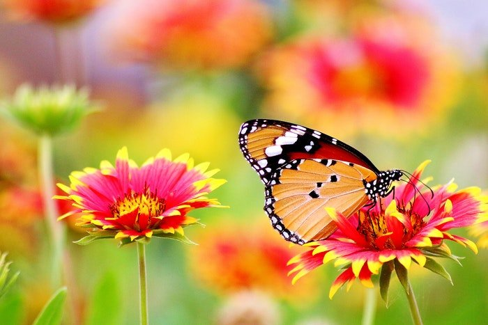 A butterfly sitting on a colorful flower