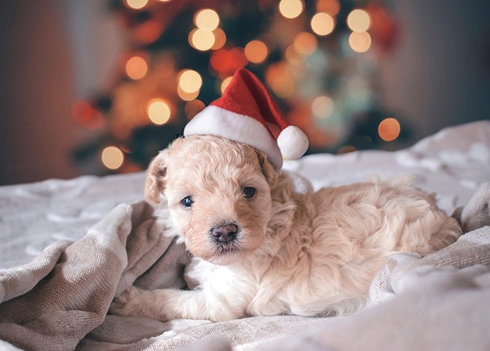 A cute dog portrait with bokeh lights background