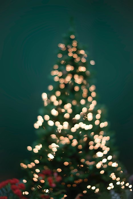 An indoor christmas photo of a decorated tree