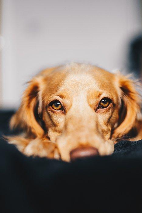 A close up dog photography portrait