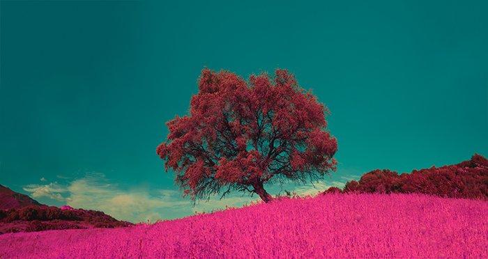 A strikingly colored fine art photography landscape