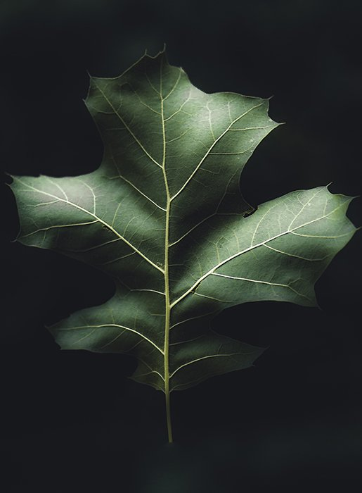 A fine art photography close up of a leaf on black background