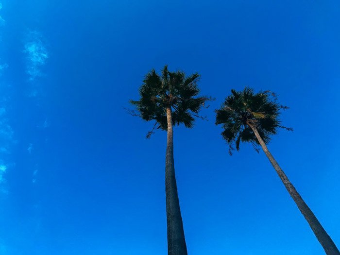 A stunning HDR iPhone photo of palm trees