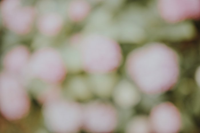 A soft and blurry abstract nature photography shot