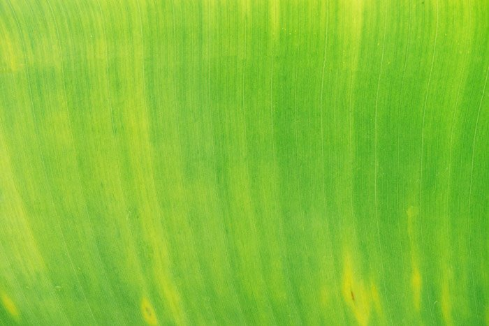 A bright green abstract nature photography shot
