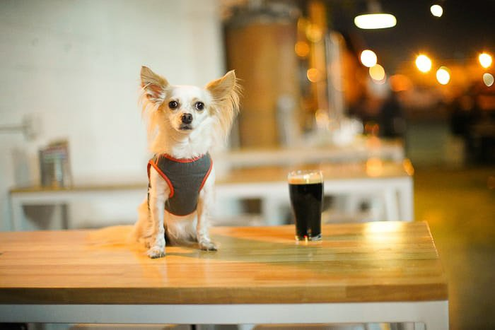 A small dog sitting on a wooden table - best point and shoot camera