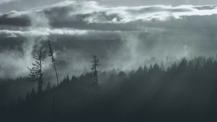 An eerie forested landscape in low light processed with adobe camera raw