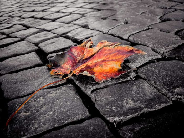 A mixture of black and white with color photography example in an image of an orange leaf on a monochrome pavement