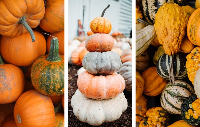 A food photography diptych of different types of pumpkins, created with cool free photoshop templates