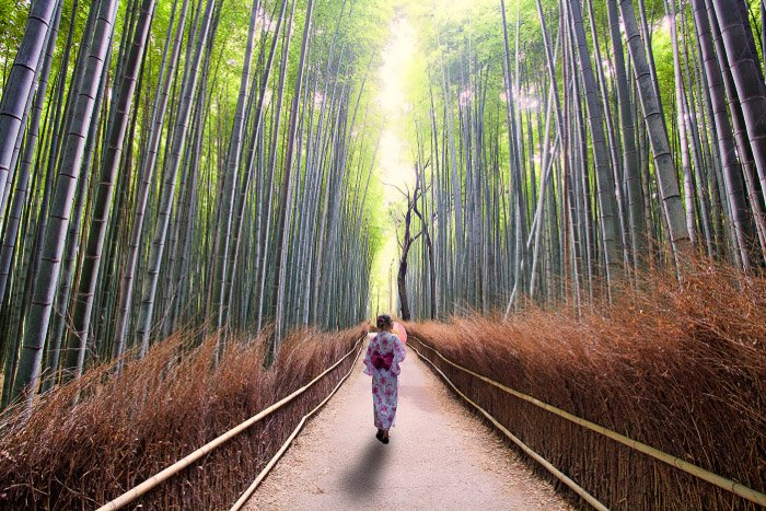 A girl in traditional japanese dress walking through a bamboo forest,
