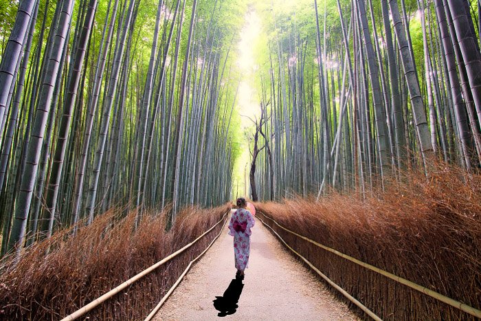 A girl in traditional japanese dress walking through a bamboo forest, casting a strong shadow