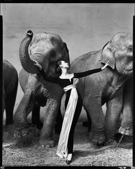 Dovima With Elephants, Evening Dress by Dior, Cirque d'Hiver, Paris, famous photography by Richard Avedon