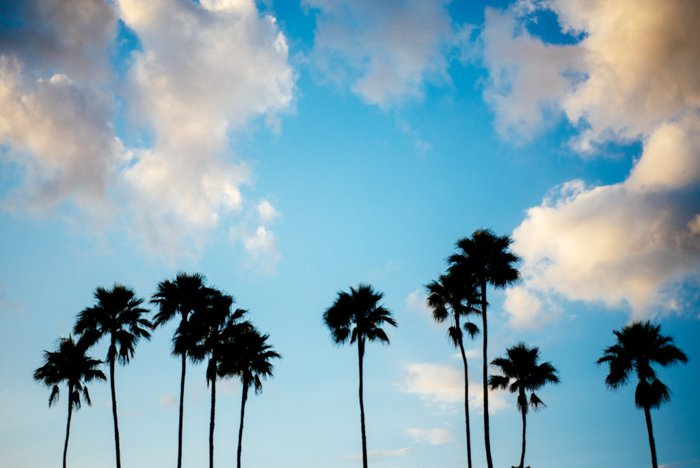 silhouette of palm trees against cloudy bright blue sky