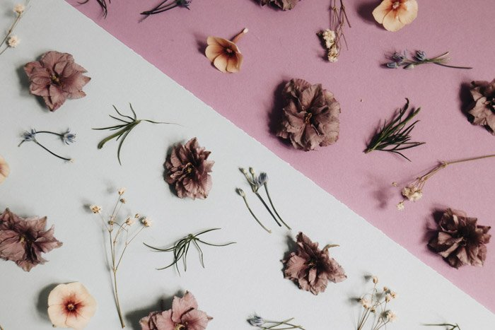 A still life photograph of flowers which demonstrates the principles of design in photography