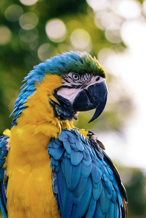 A portrait of a brightly colored macaw