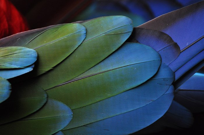 A close up photo of colorful bird feathers - abstract photos