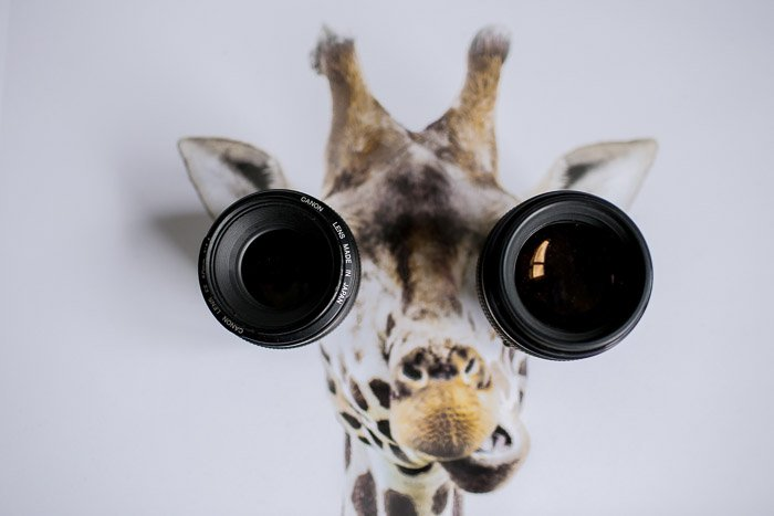 A humorous portrait of a giraffe with camera lenses for eyes