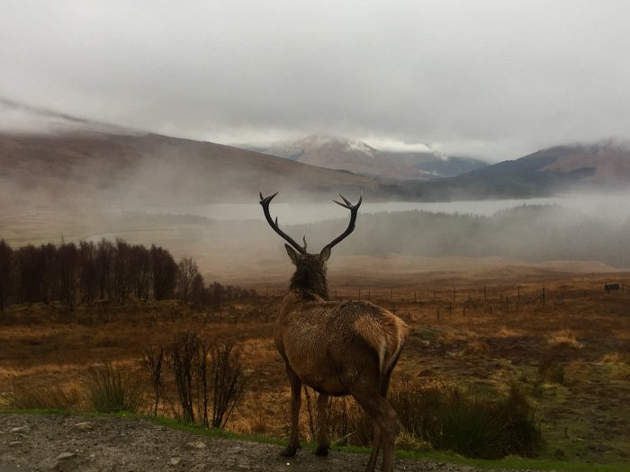 A wild stag by a majestic mountainous landscape - exposure value in photography