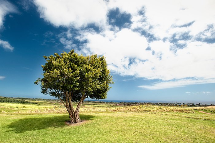 A bright and airy photo of a tree in a beautiful landscape