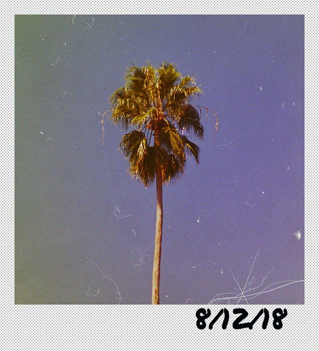 A photo of a palm tree framed by a polaroid themed Photoshop border