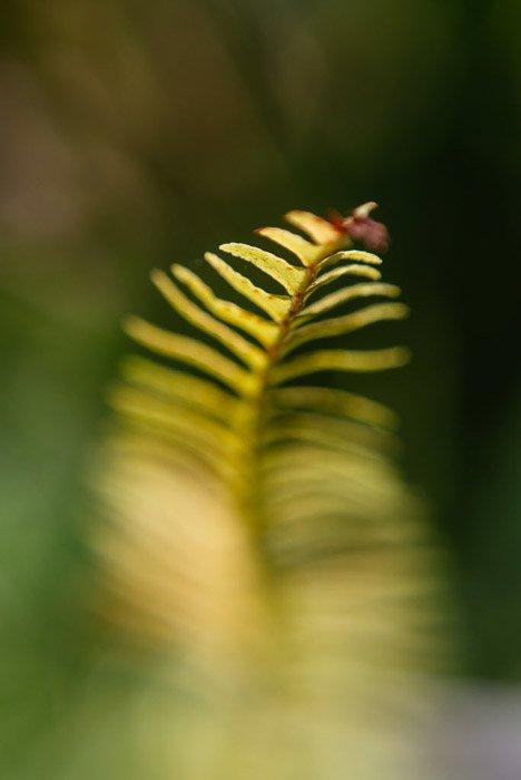 A macro photo of a green leaf shot using burst mode