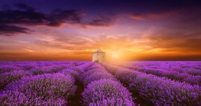 Fine art photo of a garden of purple flowers By Margaret Morgan