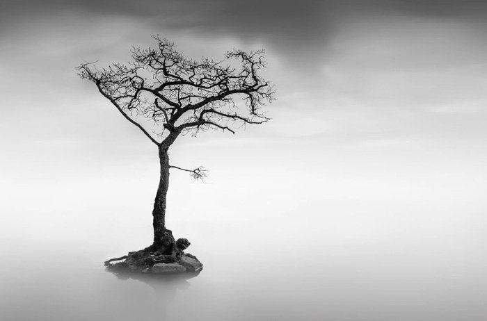 black and white photo of a tree in a lake