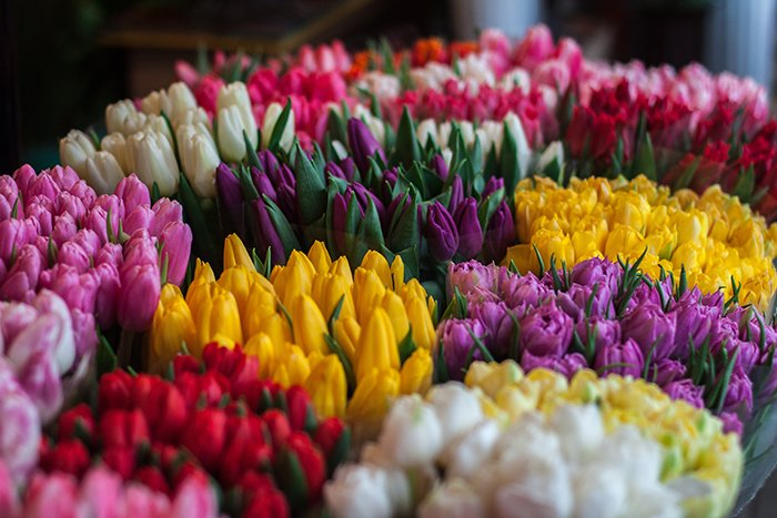 Bunches of different colored tulips - Easter flower photography tips