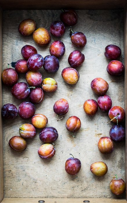 An overhead shot of plums showing use of pattern in food photography