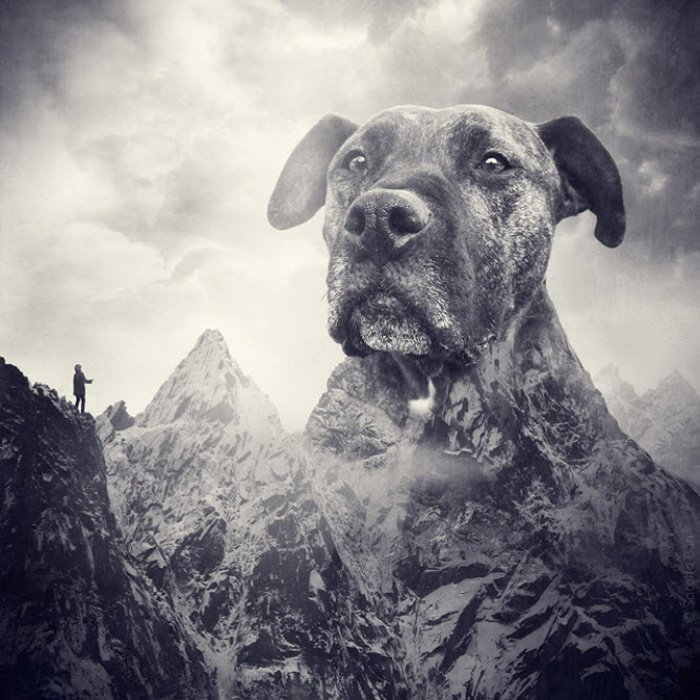 Surreal photo manipulation of a dogs head as a large mountain by Sarolta Ban