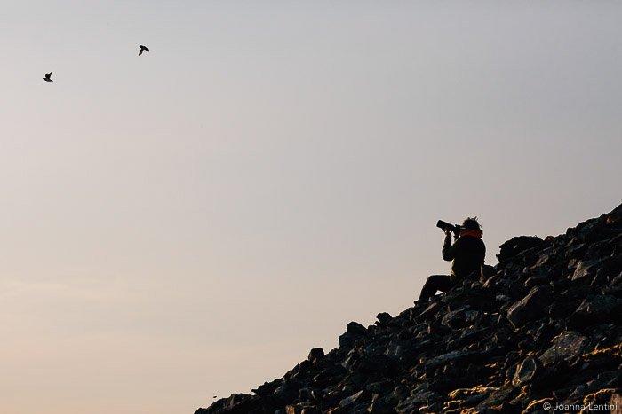 A wildlife photographer shooting a photo of birds