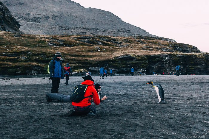 A wildlife photographer shooting a portrait of a penguin on a beach