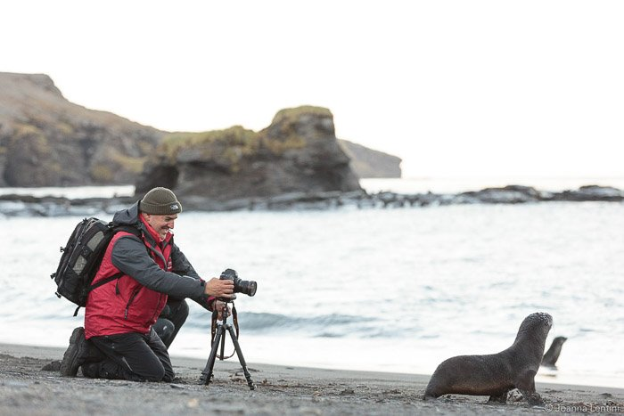 A wildlife photographer shooting a portrait of a seal on a beach