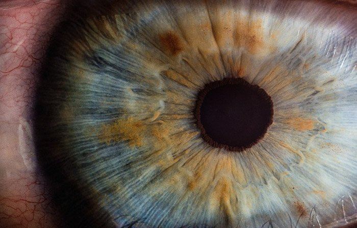 A macro picture of an eye