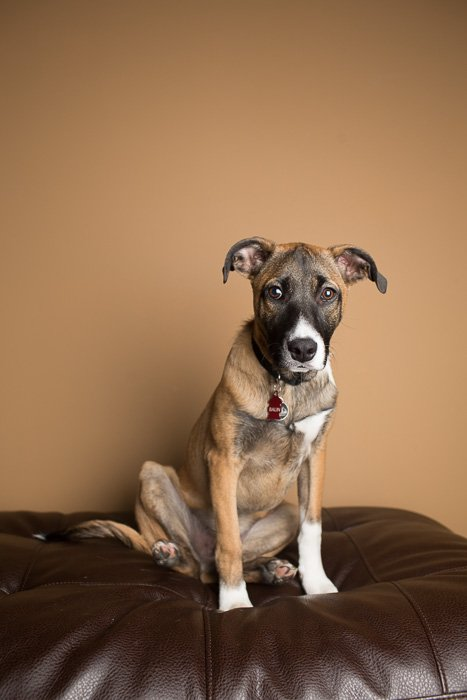 A studio portrait of a dog on a leather couch - photography studio equipment