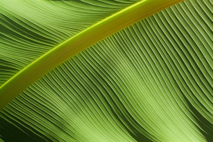 A macro photo of a green leaf - gestalt theory photography