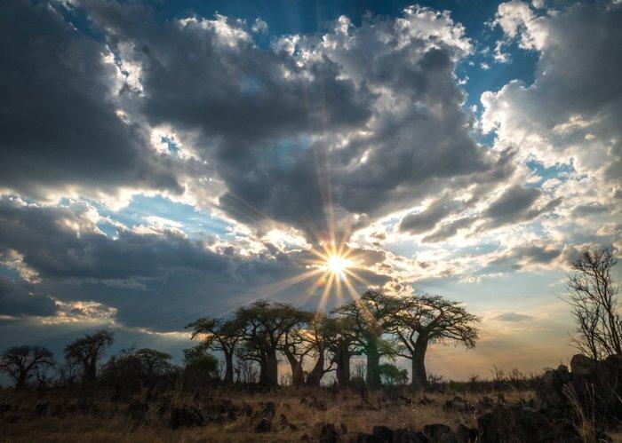 A stunning safari landscape shot
