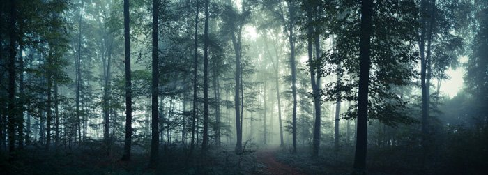 Atmospheric panoramic image of a forest