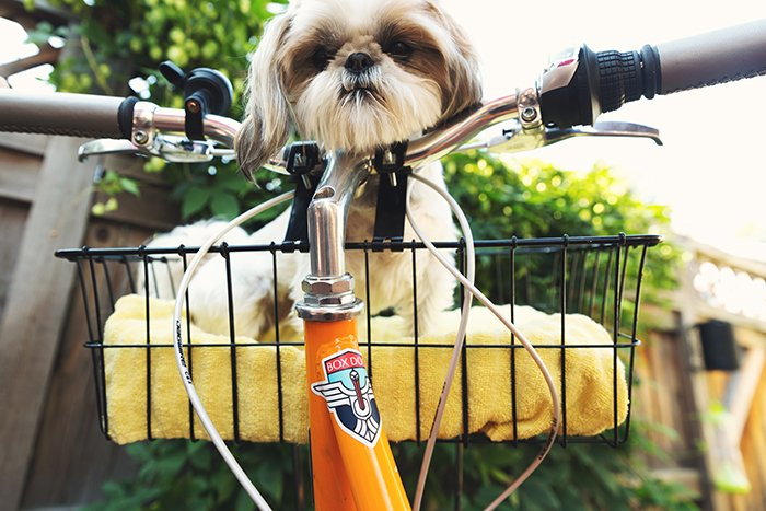 Humorous smartphone pet portrait of a cute dog resting in a bicycle basket
