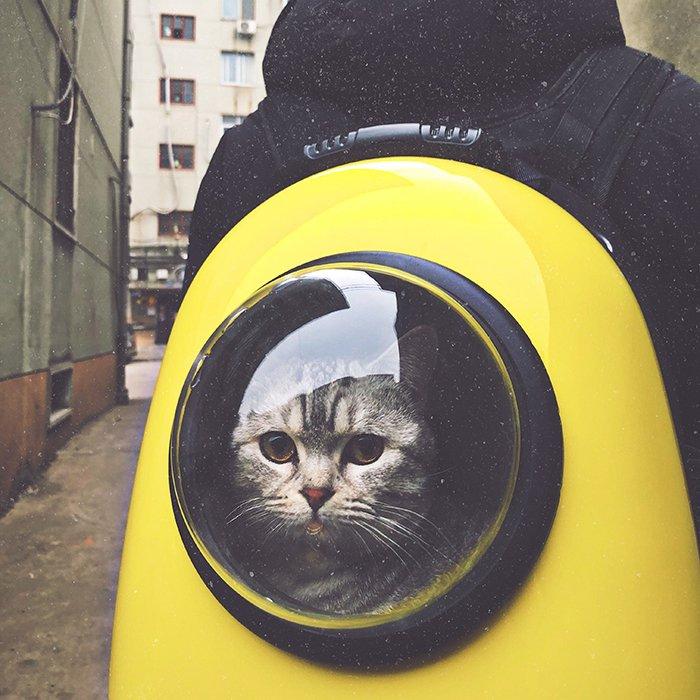Humorous pet portrait of a cute cat inside a spacesuit - smartphone pet photography tips