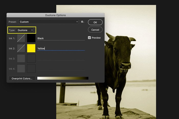 A screenshot of converting an image to duotone in Photoshop - color modes in photoshop
