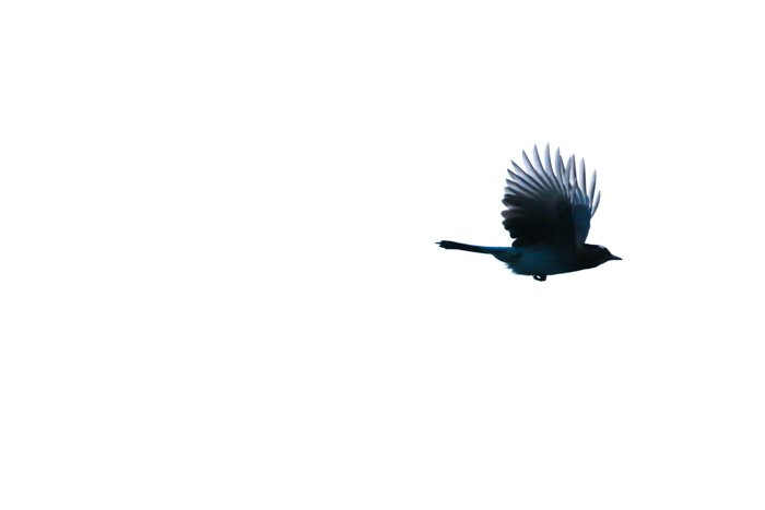 A photo of a bird in flight - best telephoto lenses