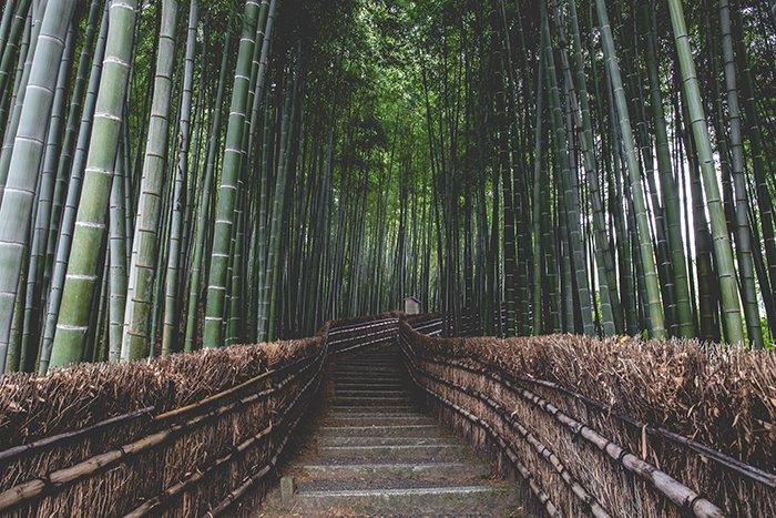 This bamboo grove in Arashiyama, Japan photography